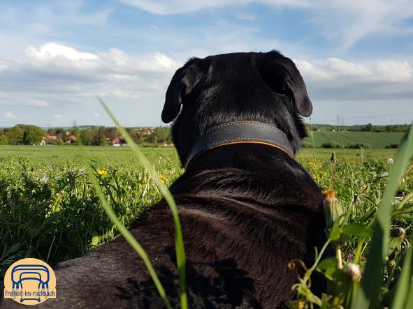 Astor genießt die Pause