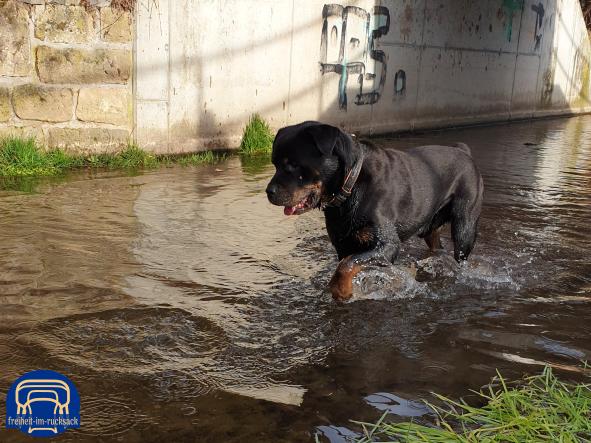 Astor beim Wassergeister vertreiben